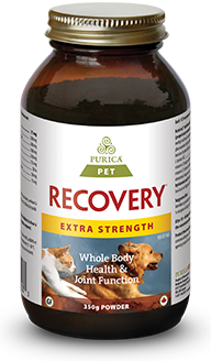 Recovery for Pets